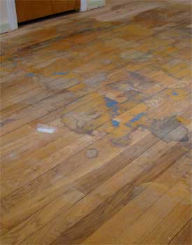 Will dog urine ruin hardwood floors floor ideas for Hardwood floors and dogs